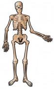 Vous aimerez aussi : Squelette en carton Halloween 1.4 m