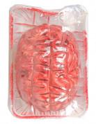 Vous aimerez aussi : Cerveau ensanglanté Halloween
