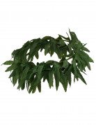 Bandeau feuilles tropicales