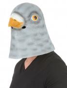 Masque pigeon latex adulte