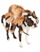 Déguisement pour chien araignée géante