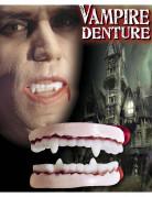 Dentier vampire adulte Halloween
