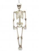 Vous aimerez aussi : Squelette positionnable 90 cm Halloween
