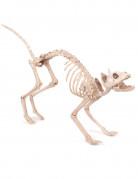 Décoration chat squelette Halloween