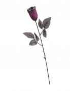 Rose noire et violette pailletée